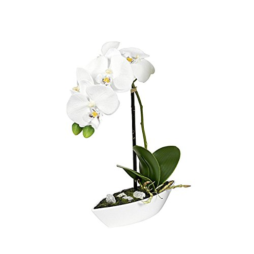 ROLLER Orchidee-Phalaenopis - creme - Kunstpflanze