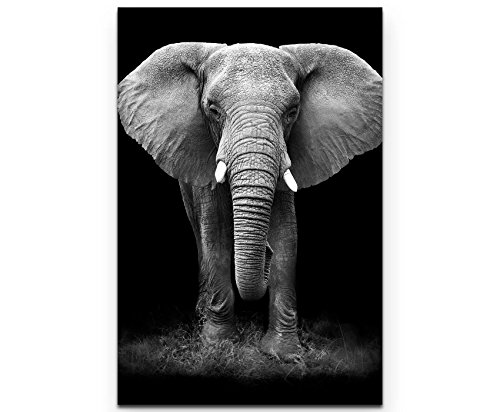 Paul Sinus Art Leinwandbilder   Bilder Leinwand 90x60cm Nahaufnahme eines Elefanten von Vorn schwarzweiß