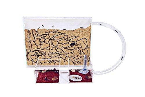 Hormiguero Kit Medium con Hormigas Gratis (AntHouse.es)