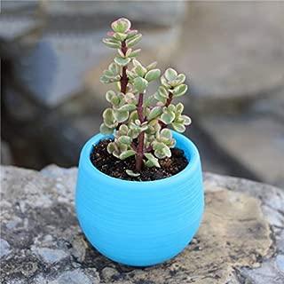 Round Planter-Mini Colorful Plastic Round Plant Flowerpot Garden Home Office Decor Planter Flower Pots on Desktop Decor Flower Flower Pot