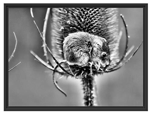 Picati kleine veldmuis in schaduwvoegen fotolijst | kunstdruk op hoogwaardig galeriekarton | hoogwaardige canvasfoto alternatief 80x60