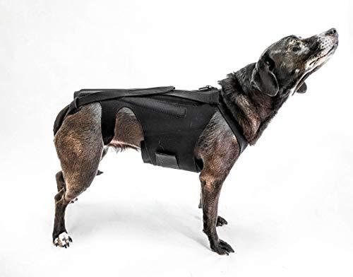 L'il Back Bracer Dog Back Brace for IVDD, Dog Back Pain, Arthritis, Good for Dachshunds, Corgies, Frenchies (Small)