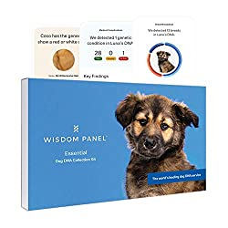 powerful Essential Wisdom Panel – Dog DNA test for ancestors, personality traits, and medical complications