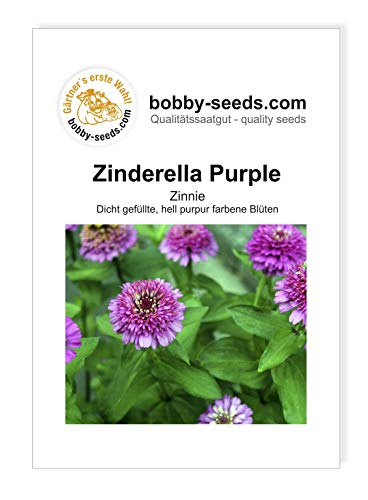 Zinderella Purple Zinnien Samen von Bobby-Seeds Portion