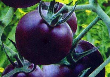 100 pcs Précipité New Plantes d'extérieur Promotion Jardin semences de tomates en pot fruits Bonsai Balcon de semences de légumes 9