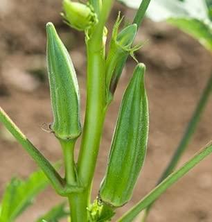 Best dwarf okra seeds Reviews