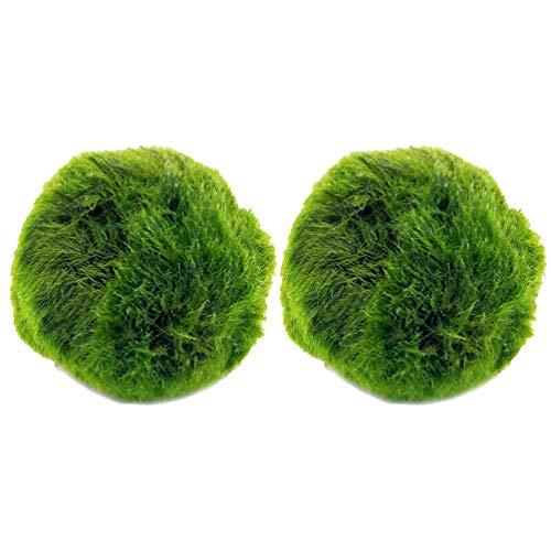 Balacoo, 2 palline di muschio marimo, per acquario, piante sferiche Cladophora, terrario, ornamento naturale, per acquario, diametro 3-4 cm