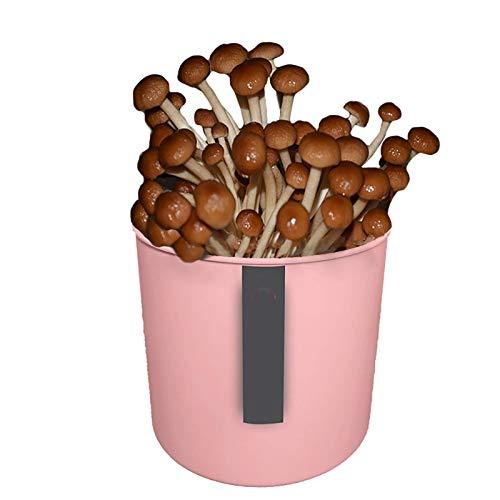 Paddestoelkweekset binnenshuis, Mushroom Spawn Seeds Starter Kit, kweek je eigen champignons binnenshuis in ongeveer 10 dagen en geniet van de natuur Lifetea-bo