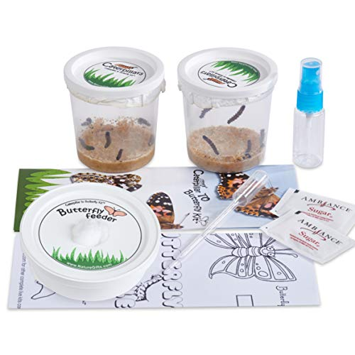 Nature Gift Store 10 Live Caterpillars Shipped Now: Butterfly Kit...