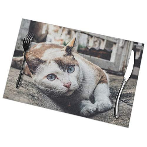Ricolor kat leunend op grijs beton bestrating Placemat wasbaar voor keuken diner tafelmat, gemakkelijk te reinigen gemakkelijk te vouwen plaats mat 12x18 Inch Set van 6