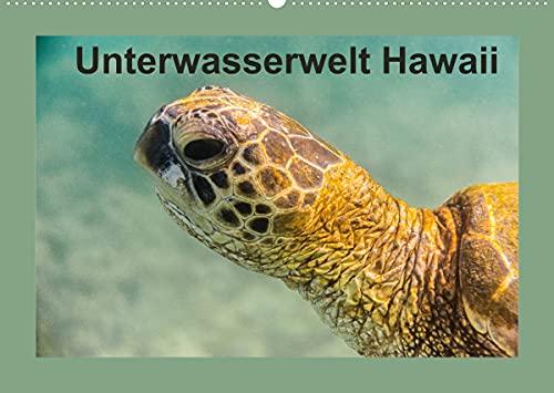 Unterwasserwelt Hawaii (Wandkalender 2022 DIN A2 quer)