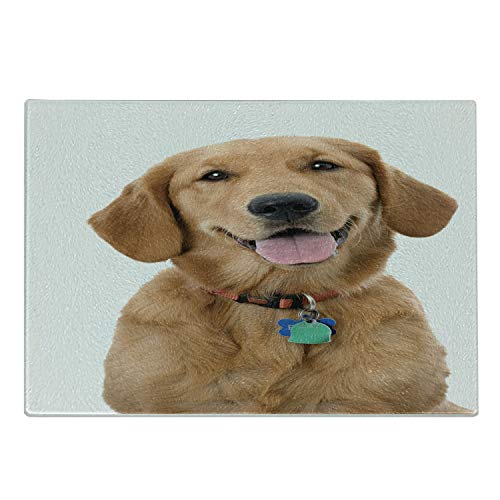 Ambesonne Golden Retriever Cutting Board, Portrait of Young Pedigreed Dog Wearing a Collar and Tags Domestic Animal, Decorative Tempered Glass Cutting and Serving Board, Large Size, Pastel Brown