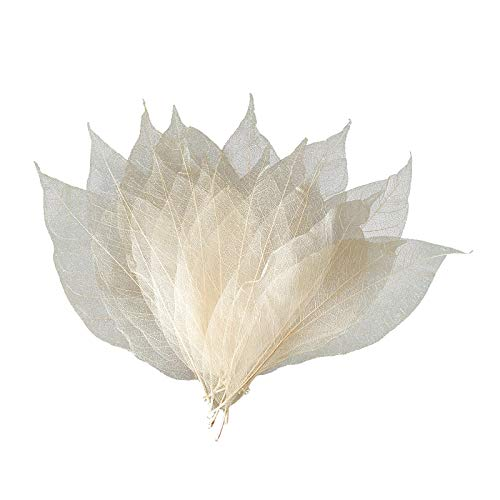F Fityle Art Multi Color Skeleton Leaves for DIY Wedding Decoration Cardmaking Embellishment Gift Box - Primary magnolia