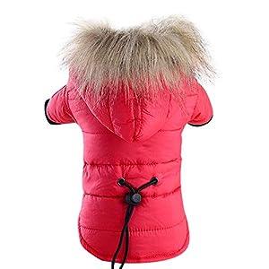 Manteau d'hiver Chaud Veste Rembourré Vêtements Capuche Vêtements d'hiver Lavable en Coton pour Chiot Petit Chien