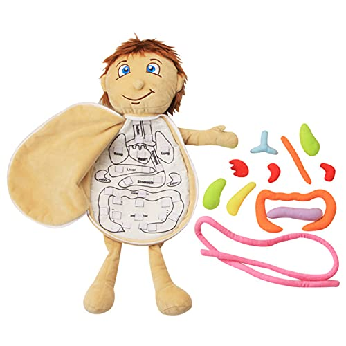 3D Organ Toy Set, Human Body Anatomy Awareness Teaching Tools, Preschool Educational Organ Plush Toys, Science Learning Kits for Kids for Home School Teaching Aids (Organ Toy)