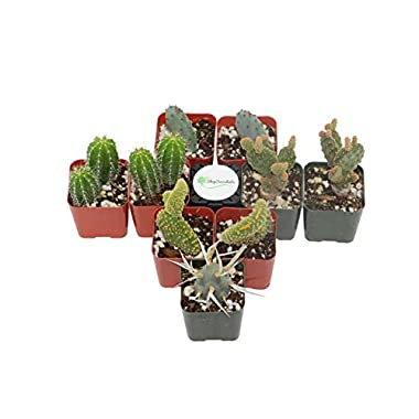 Shop Succulents Cactus (Collection of 9)