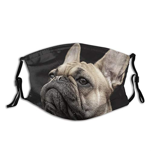 Frenchie Dog Print Cloth Face Mask Colorful for Men Women Cool Lightweight Breathable Comfortable Balaclava Face Mask Mouth Protection with 2 Filters