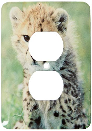 Einzelne Duplex-Wandplatte, Steckdosen-Wandplatte, Tansania, Serengeti NP, Cheetah Cub-AF45, KSC0001-Kevin Schafer 2 Steckdosenabdeckung