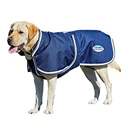 Golden Labrador wearing a Navy Weatherbeeta Dog Parka.