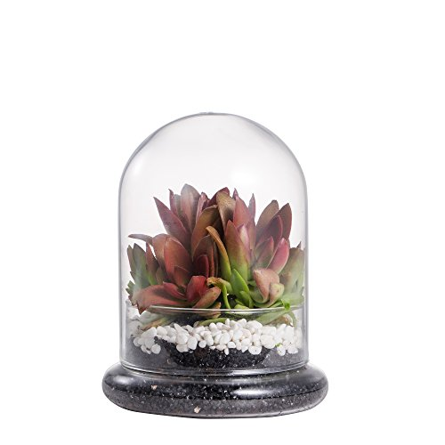 Cookie jar succulent terrarium