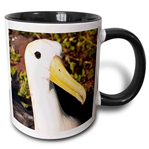 NA Ecuador, Islas Galápagos, Waved Albatross-Sa07 Mde0156-Michael De Freitas Taza de Dos Tonos, 11 oz, Negro/Blanco