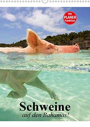 Schweine auf den Bahamas! (Wandkalender 2021 DIN A3 hoch)