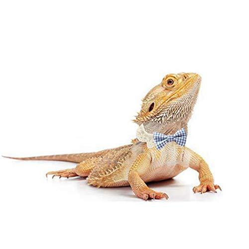 Lizard Clothes Bearded Dragons Blue White Plaid Bowtie with Elastic Lace Decor Handmade Stretchy Bowknot Collar Outfit Reptile Apparel Accessories Photo Gift Lizard Clothes for Leopard Reptile Gecko