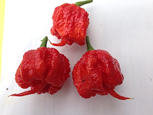 GRAINES DE PIMENT- CAROLINA REAPER HP22B &CAROLINA YELLOW-