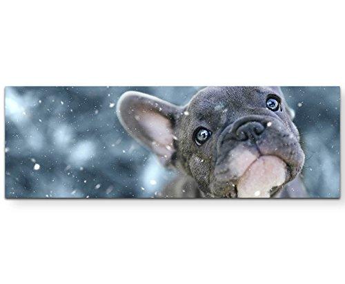 Paul Sinus Art Leinwandbilder   Bilder Leinwand 120x40cm Französische Bulldogge Welpe