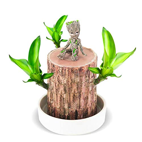 1Pc Mini Brazilian Wood Potted Plants Air Cleaning Lucky Wood Plant Hydroponic Tree Stump Desktop Bonsai 6-6.5 cm in Diameter with Groot Ornament and Base