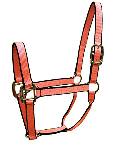 "Hamilton Nylon Pony/Mini Donkey Quality Halter for 100 to 200 lb Horse, 3/4"", Neon Coral with Black Trim"
