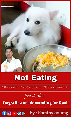 Dog is not eating: Pomtoy Anurag