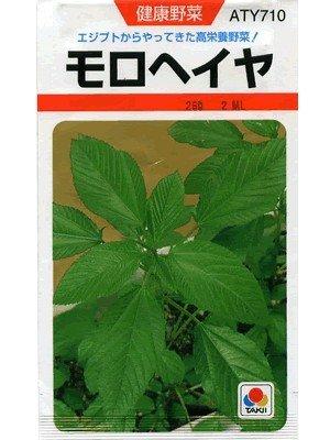 モロヘイヤ タキイのモロヘイヤ種です