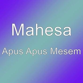 Apus Apus Mesem