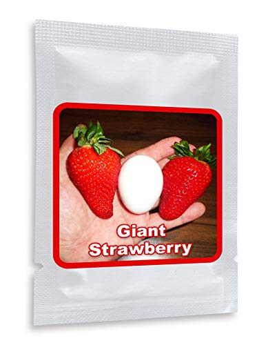"""RIESENERDBEEREN - Die größte Erdbeere der Welt""""Giant"""" - ca. 100 Samen"""