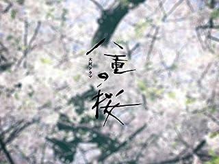 八重の桜(NHKオンデマンド)