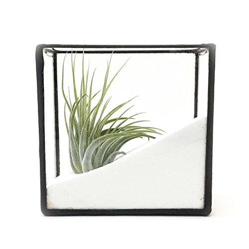 Support mural rectangulaire Tillandsia avec plante aérienne et sable blanc / pot en verre géométrique / pot moderne / fabriqué à la main en Angleterre (petite taille, avec sable et plante aérienne)