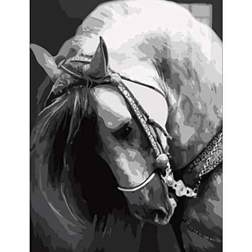 WLJX Sin Marco DIY Pintura por Números Pint por Número de Kits for Adultos Mayores Avanzada Niños Joven,Cabeza de caballo,40cm x 50cm