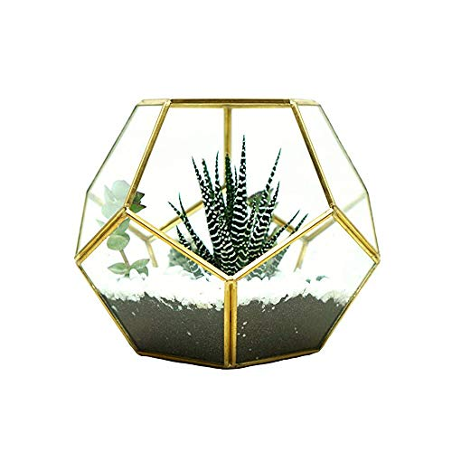 MINGZE Pentagon Dodecaedro geométrico terrario, suculenta terrario, Cristal Transparente Planta Cactus suculentas Maceta (17.5 * 17.5 * 15CM, Dorado El Cobre)