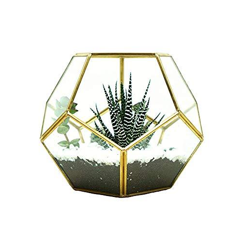MINGZE Terrario a forma di pentagono, trasparente, formato da dodici lastre pentagonali in vetro, vaso per piante grasse, felce e muschio, del balcone in miniatura Décor (17.5*17.5*15CM, d'oro rame)