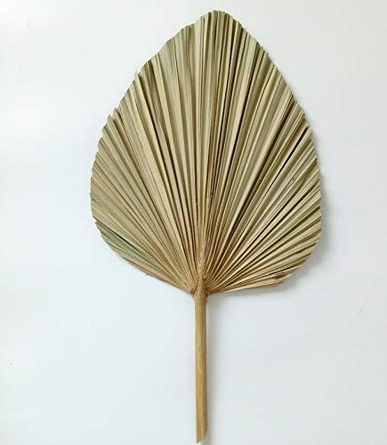 Hojas de palma secas, abanico de hojas de palma de flores naturales,...