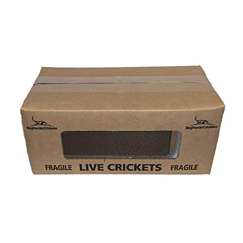 1000 crickets large - 5