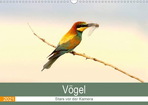 Vögel Stars vor der Kamera (Wandkalender 2021 DIN A3 quer)