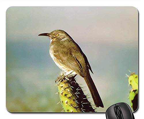 Mouse Pad - Curve Billed Thrasher Bird Perched Mimid Desert