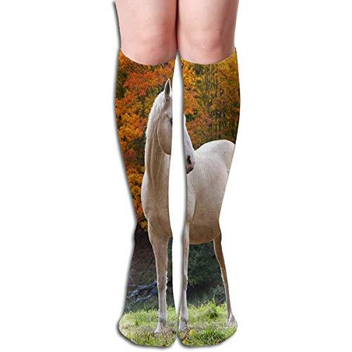 xinfub Calcetines de cocodrilo de dibujos animados montando un monociclo caliente para mujer calcetín de calcetín de fiesta para niñas cómodas10201