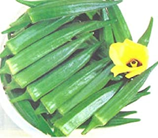 Chanchal Okra Seeds of India (40 Seed Pack)