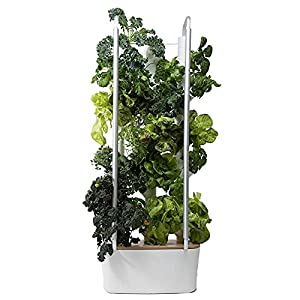 Gardyn Home - Indoor Vertical Garden - Smart Hydroponic Growing System with WiFi - 30 Indoor Plants - Great for Vegetables, Herbs, Greens - Best Invention by Time Magazine