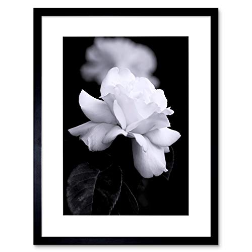 The Art Stop Photo Nature Black White Rose Petal Flower Framed Print F12X4204
