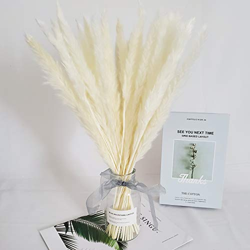 TRvancat 30 Pcs Natural Dried Pampas Grass Reed Grass Plume Dried Flower Phragmites Communis for Wedding Flower Arrangements Home Decor (White)