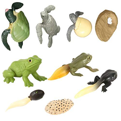 BESPORTBLE 2 Sätze Tier Wachstumszyklus Modell Frösche Schildkröte Wachstum Figuren Biologisch Pädagogische Tiere Spielzeug Modell Frühpädagogik Spielzeug Unterrichtszubehör Geschenk
